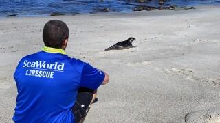 Eric Otjen from SeaWorld Rescue Team.JPG