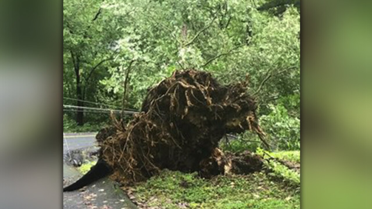 Hurricane Florence expected to bring down trees