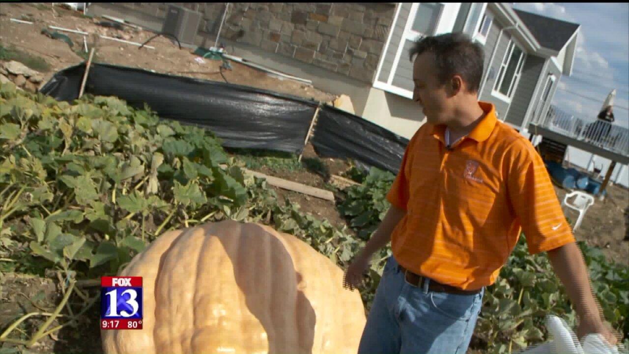 Utah man sets sights on state's pumpkinrecord