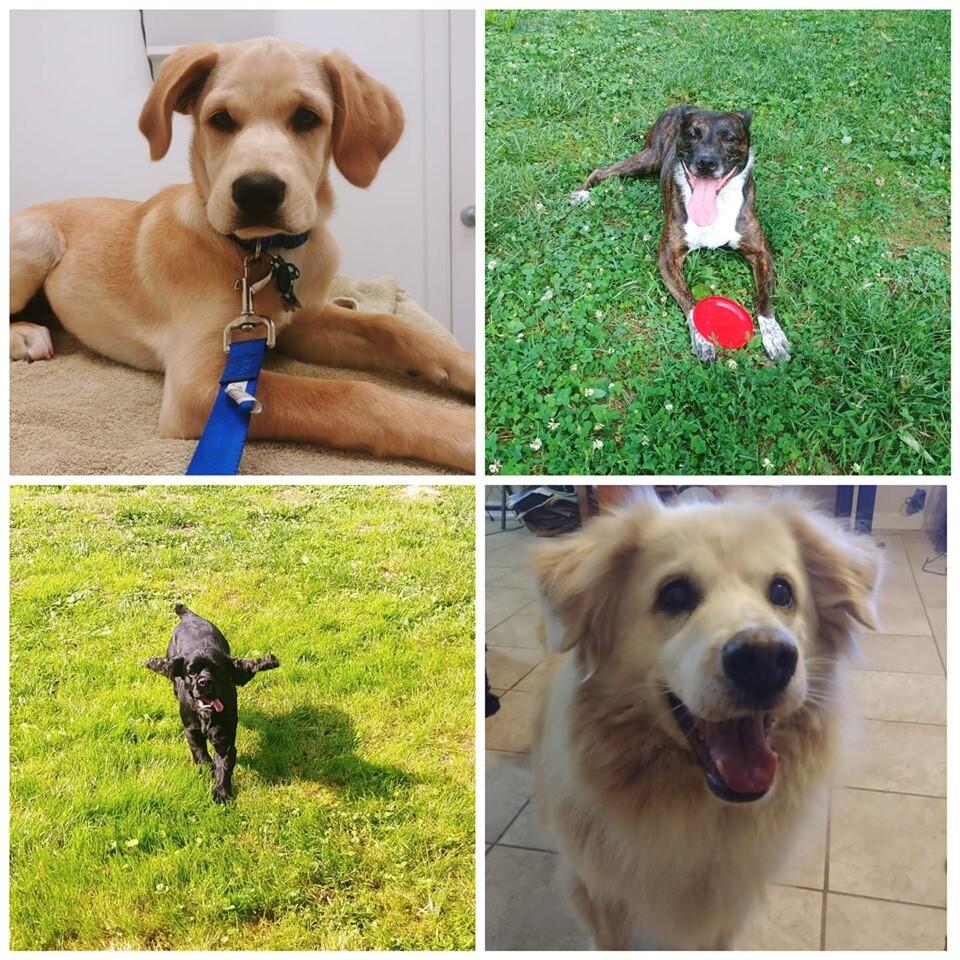 Bailey, Princess, Marley and Buddy