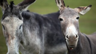 Donkey Sanctuary Appeals For New Donkey Foster Homes