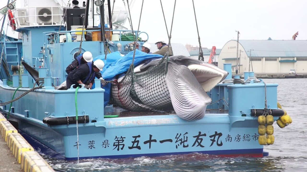By killing whales, is Japan trying to revive a dying industry?