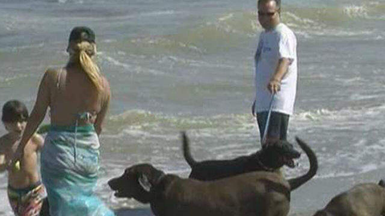 Boynton to discuss day at the beach for dogs