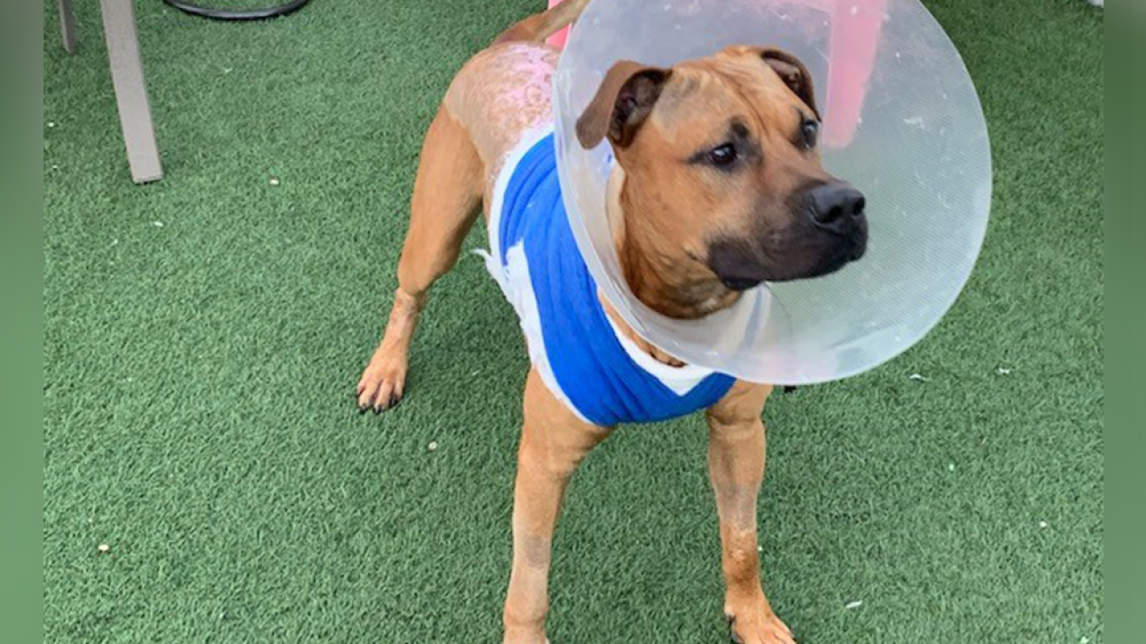 Florida dog rescued after someone poured boiling water on its back