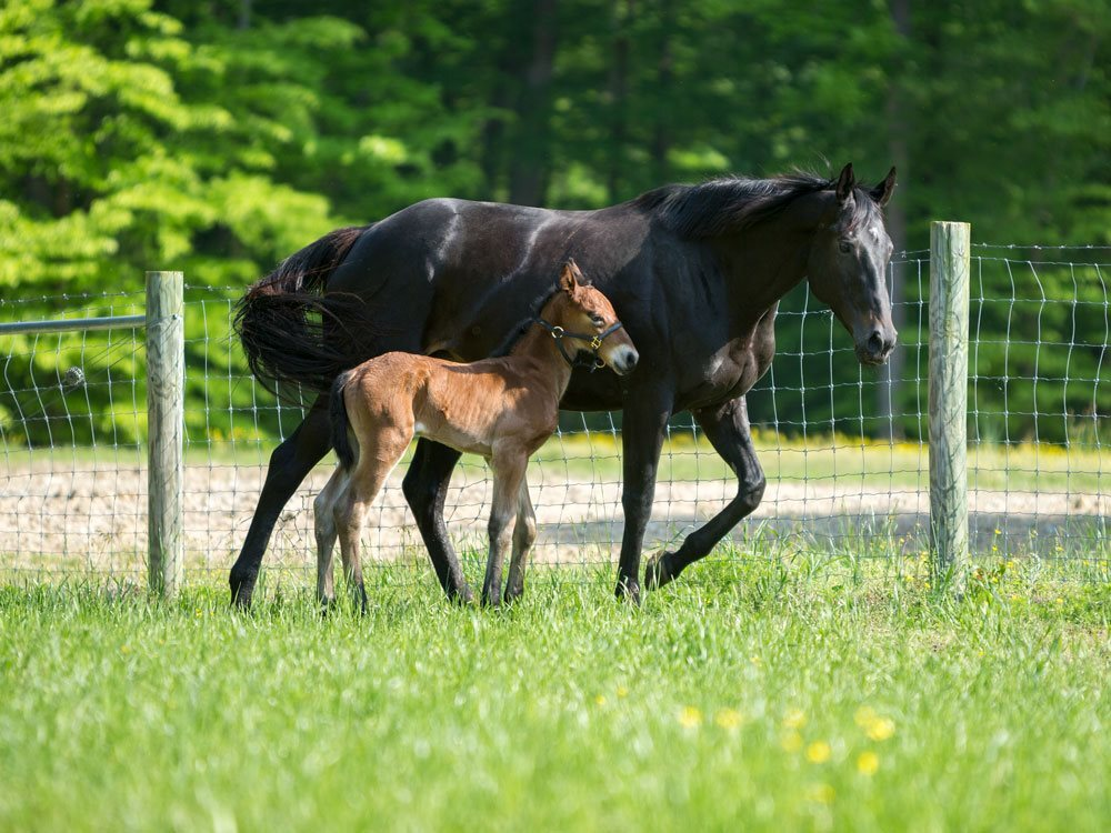 Photos: Colonial Williamsburg department welcomes first foal born in 16years