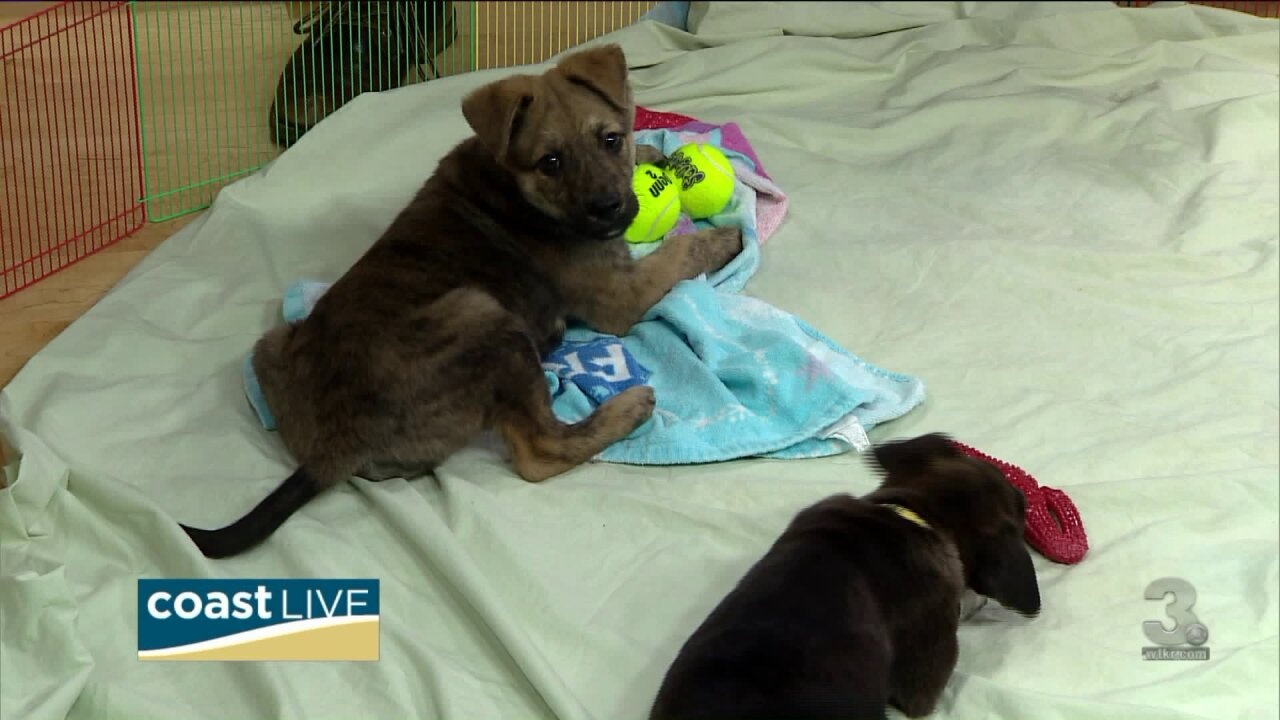 Playing with puppies and preparing for Puppy Bowl XV on Coast Live