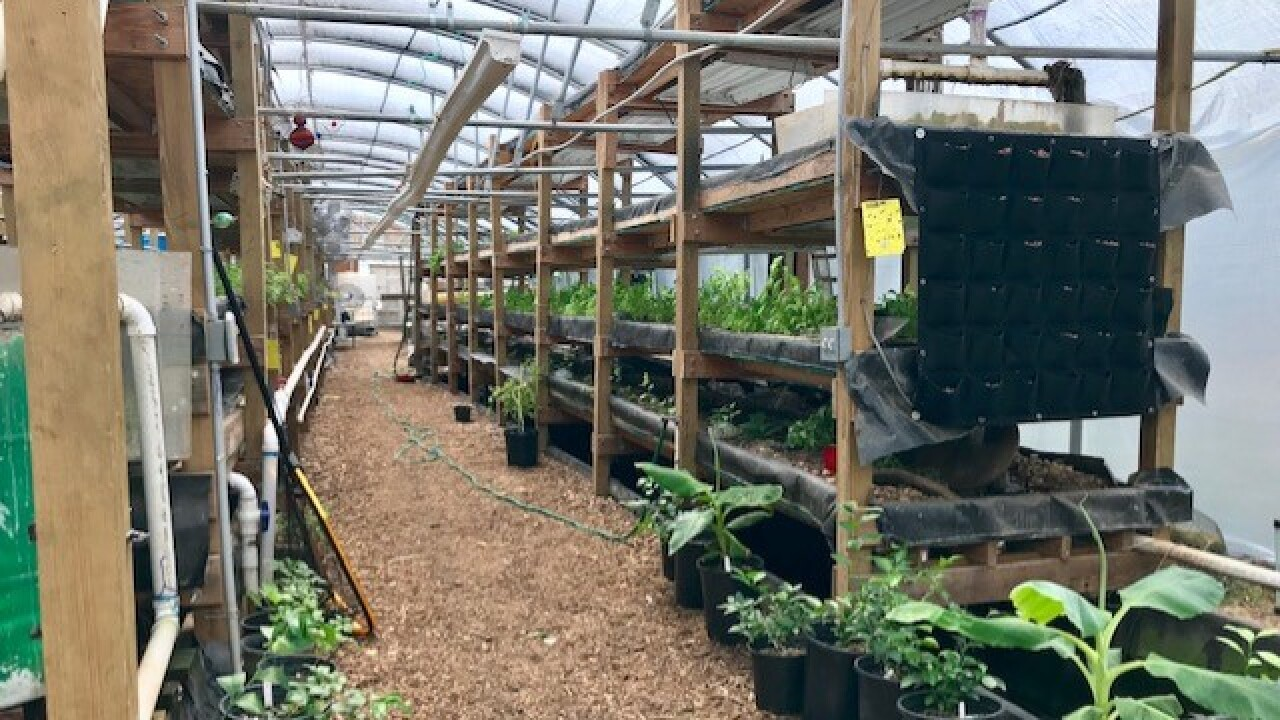 Nile Valley Aquaponics.jpg