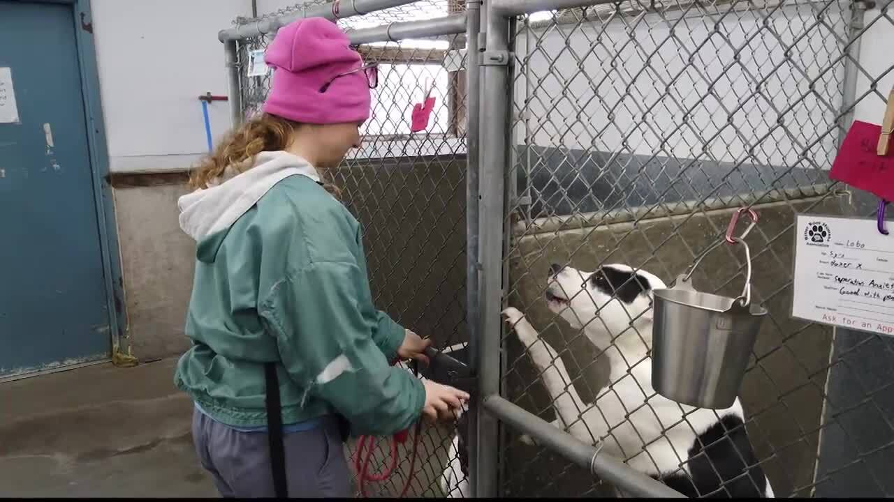 Bitter Root Humane Association looking to breathe new life into aging facility