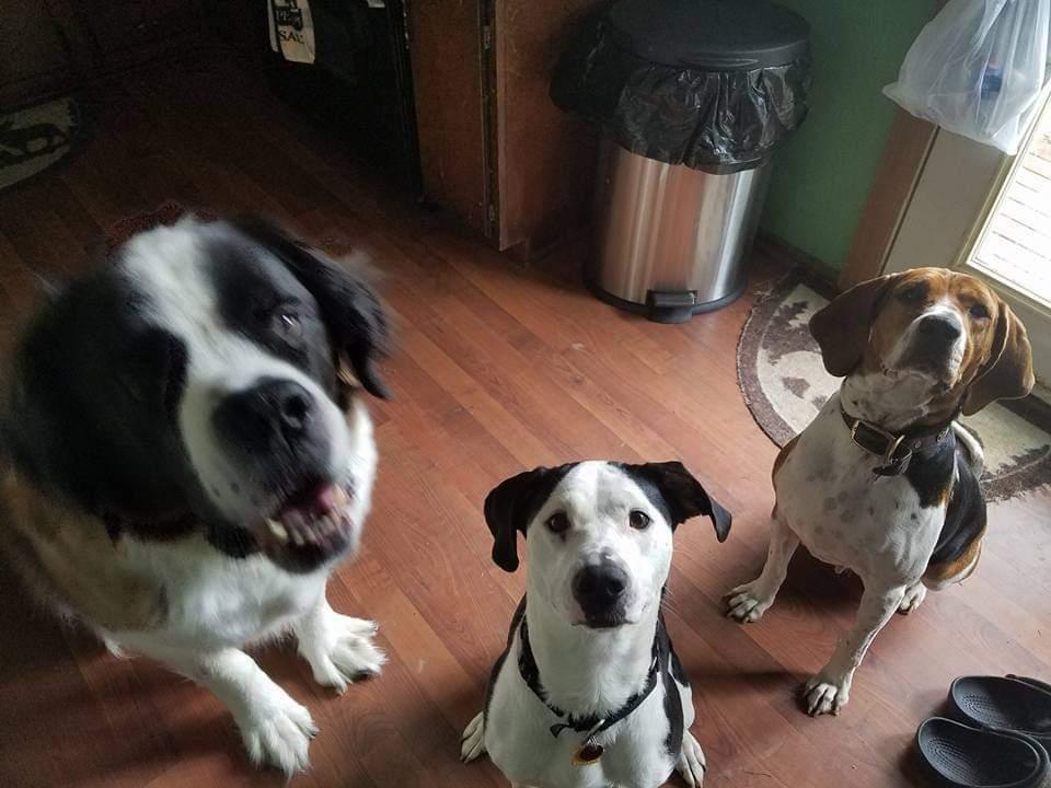 Thor, Molly, Daisy.jpg