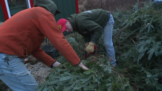 Christmas tree shortage not a problem in Northeast Ohio
