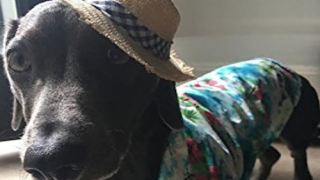 You Can Buy A Hawaiian Shirt For Your Dog—So Get Ready For Your Best Summer Ever