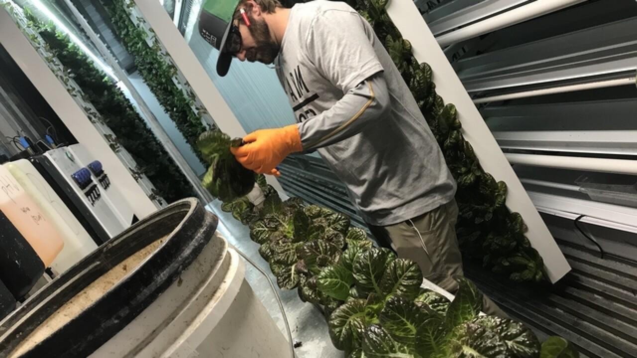 St. Pete farm sells 'worry free' romaine lettuce