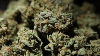 More baby boomers using marijuana, study says