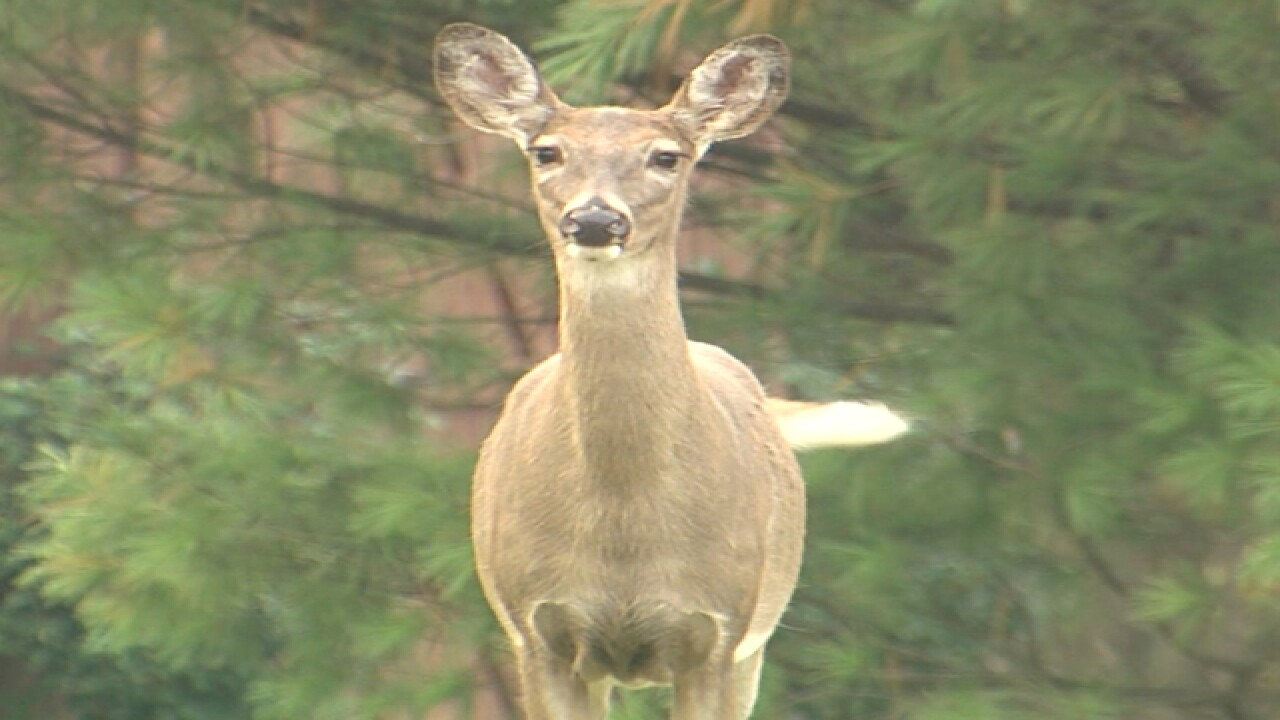 File image of deer