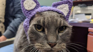 CAT CROCHETED EARS.png