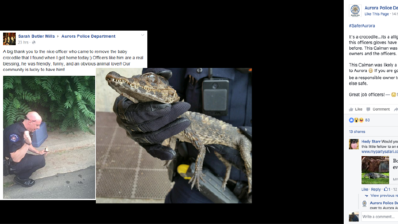 Aurora Police officer removes caiman from front yard of Aurora home