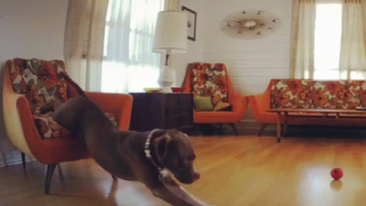 WATCH: Dog's failure to wake up is all of us on Monday morning