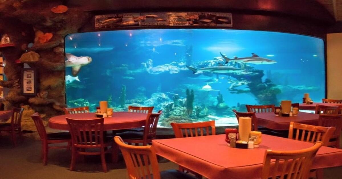 Unique Restaurants In Phoenix 8 Places To Dine With Animals