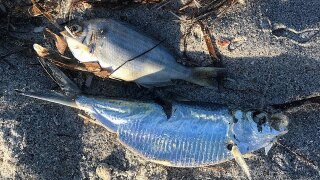 Red tide impacts local businesses