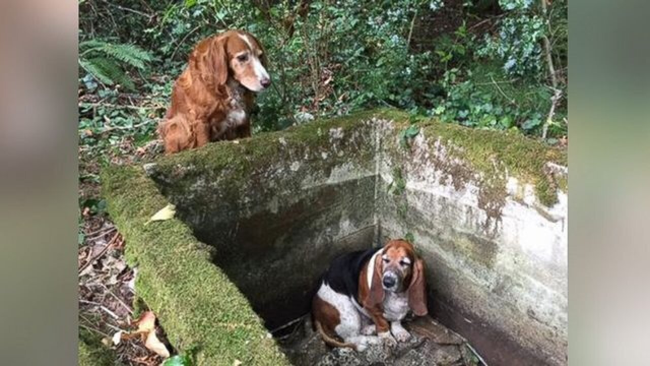 Dog watches guard over its trapped 'best friend'