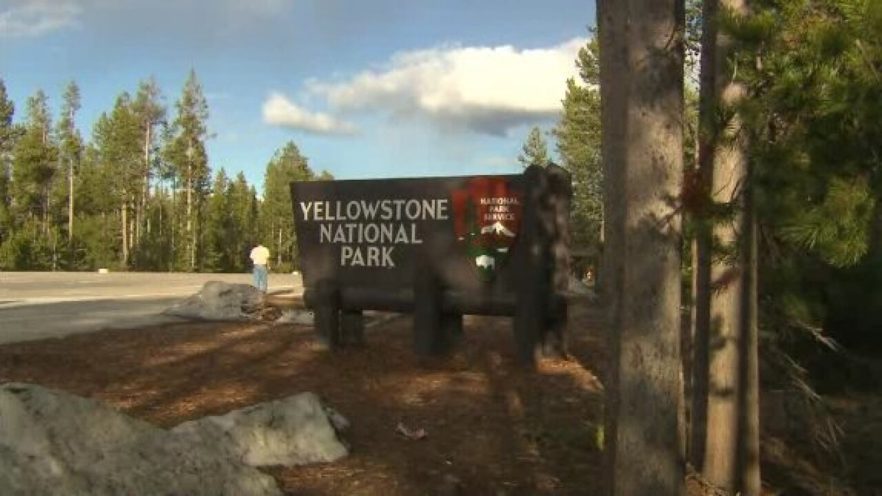 Woman killed in Yellowstone National Park was trying to take photo of an Eagle
