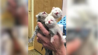 Animal shelter rescues more than 60 cats, kittens found in Livingston home
