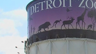 Detroit Zoo to vaccinate gorillas, chimpanzees, tigers and lions against COVID-19