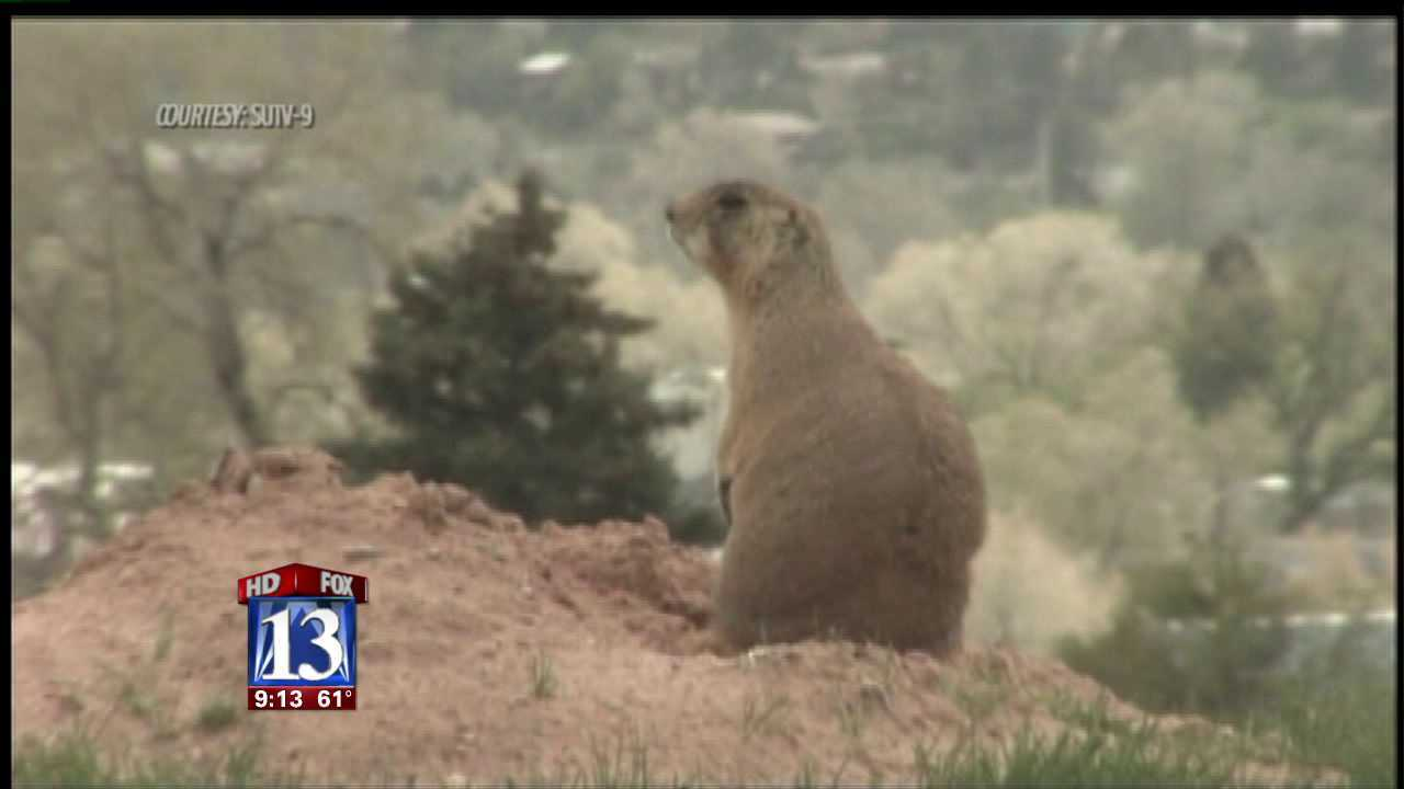 Utah towns fight federally protected prairie dogs