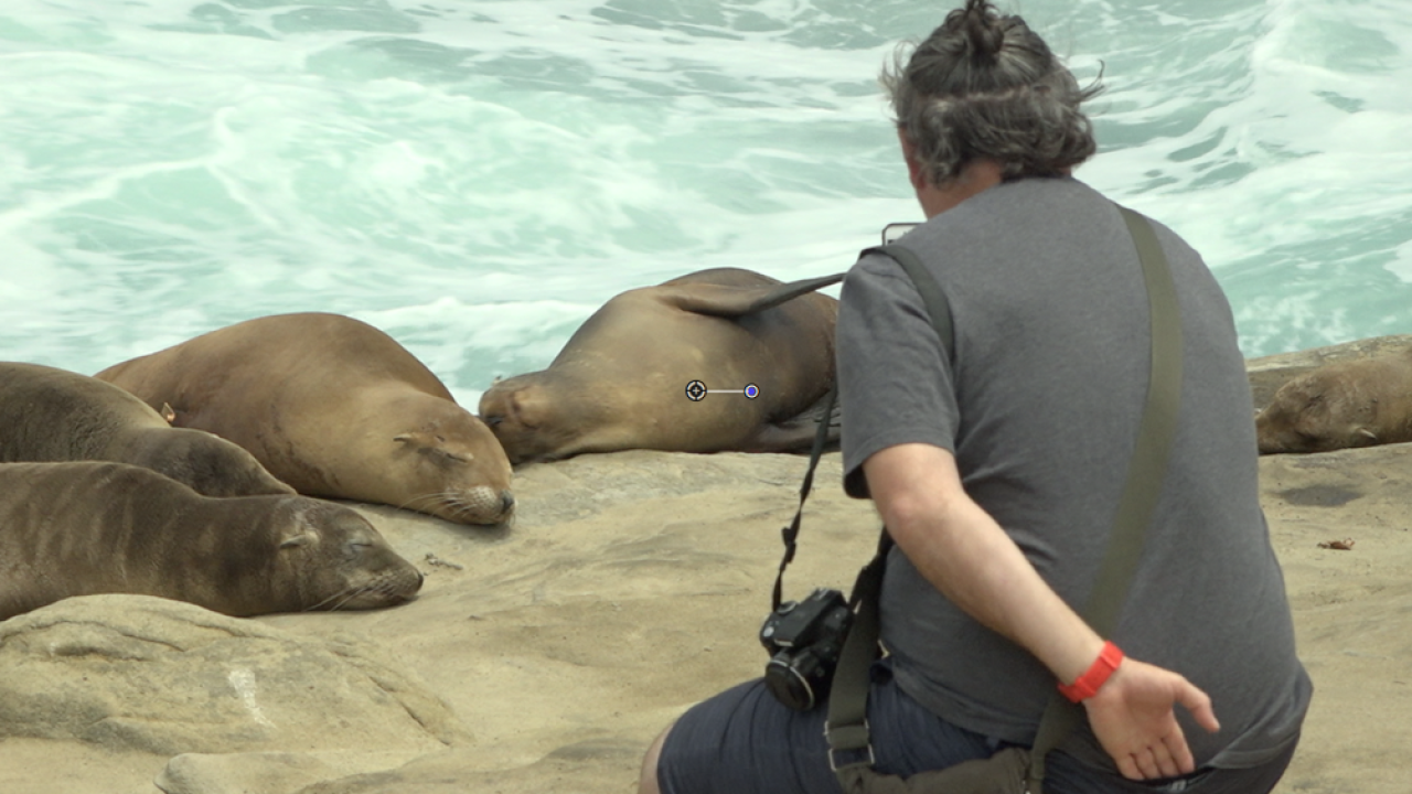 sea lionsafety.png