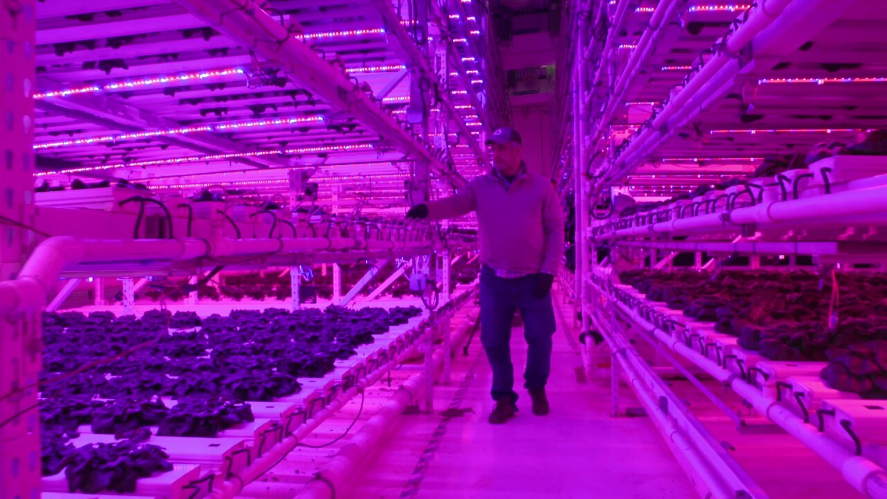 Vertical farming provides a different approach to raising the foods we eat