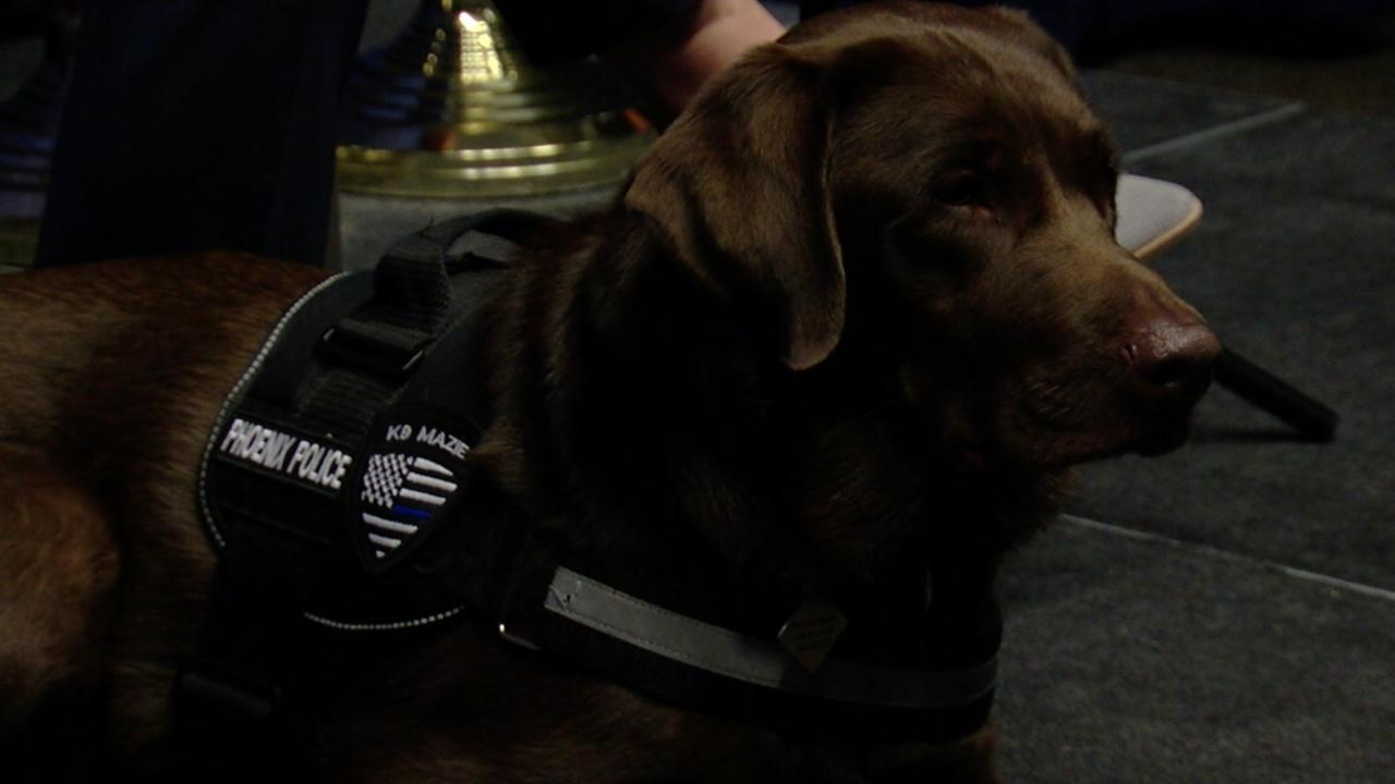 Phoenix Police support dog