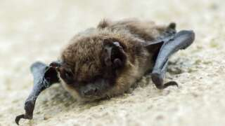 Bat observations in Montana are more frequent in autumn