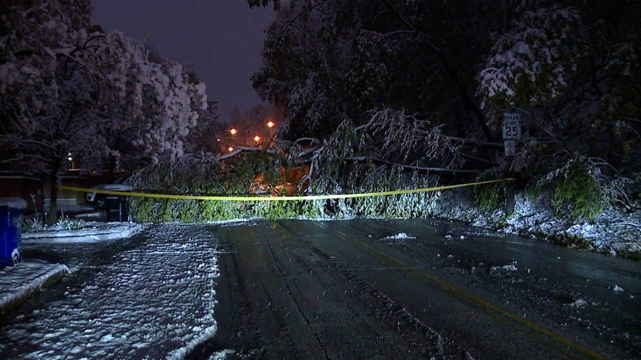 Edgehill tree down.jpg