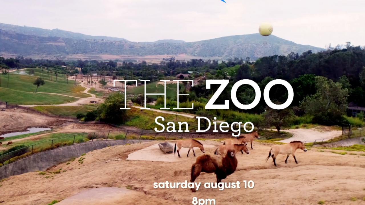 the zoo san diego.png