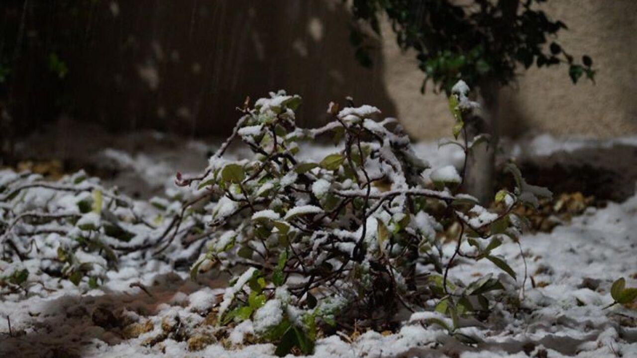 SNOW PHOTO BY FERN RIVERA