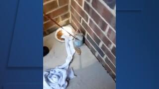 Sheffield Village Fire Department rescues kitten from 15-foot drain pipe.jpg
