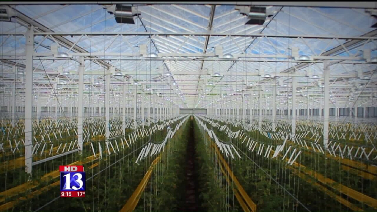 Massive greenhouse in Utah uses power plant's waste to fertilize tomatoes