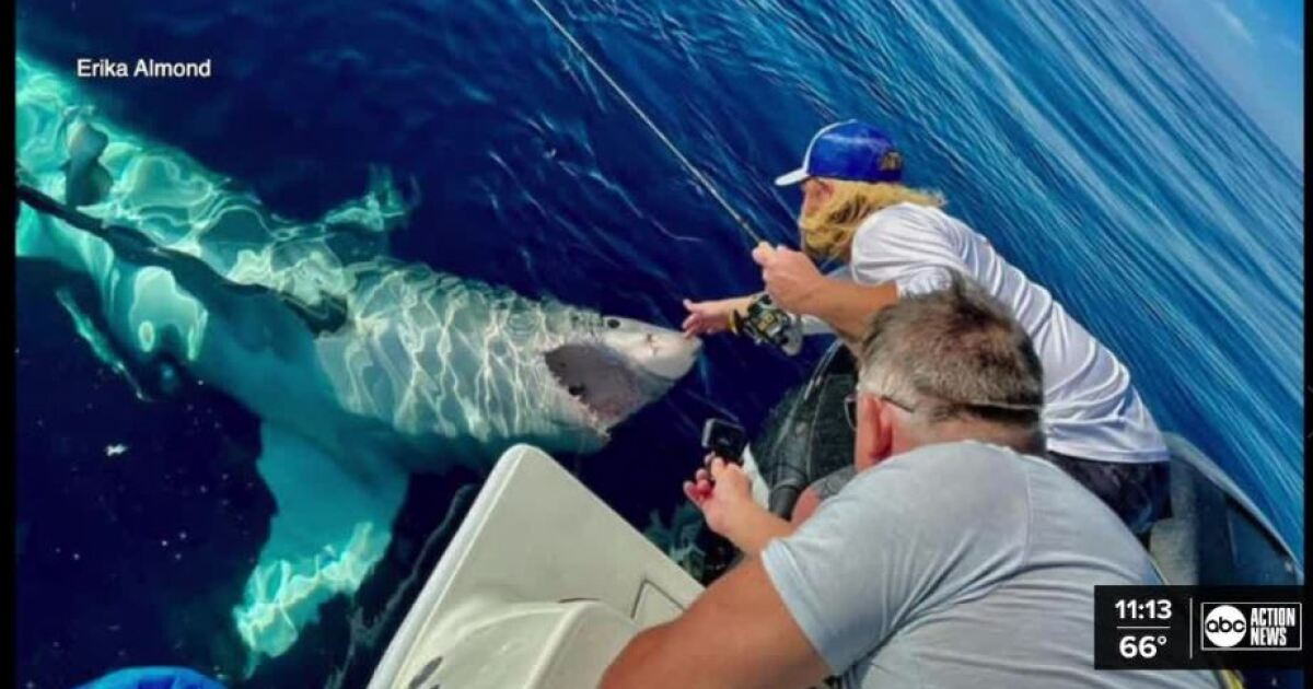 Fisherman encounters great white shark 65 miles off the coast of Pinellas County