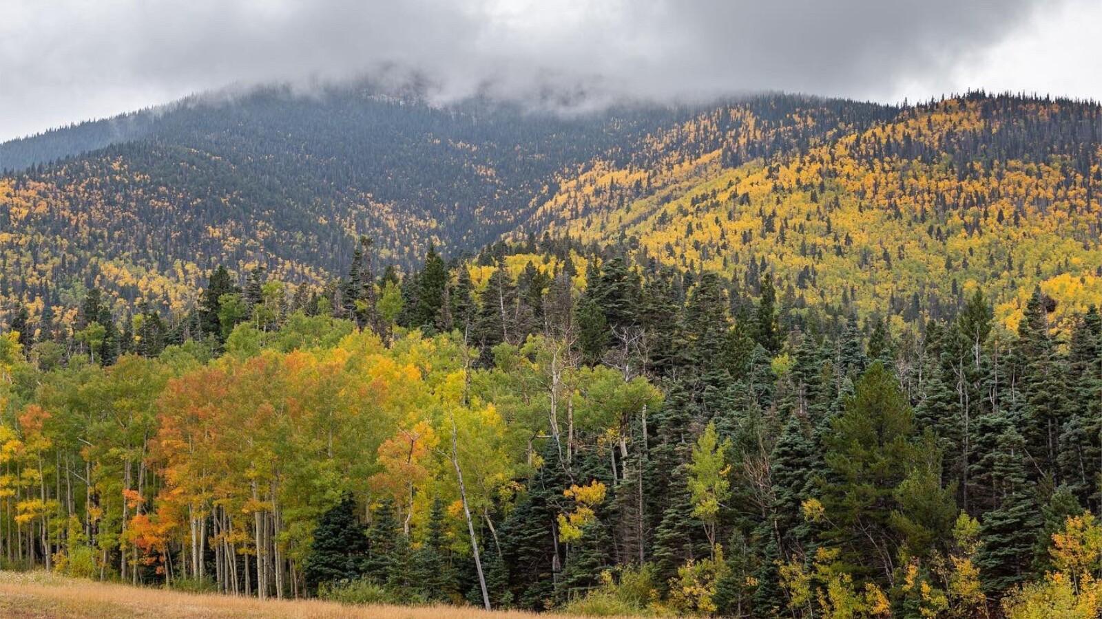 2Cuchara Pass near Highway 12 Colorado Mountain Images 2.jpg