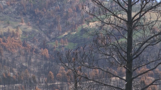 Wildfire Community Preparedness Day: ways to protect your home from wildfires