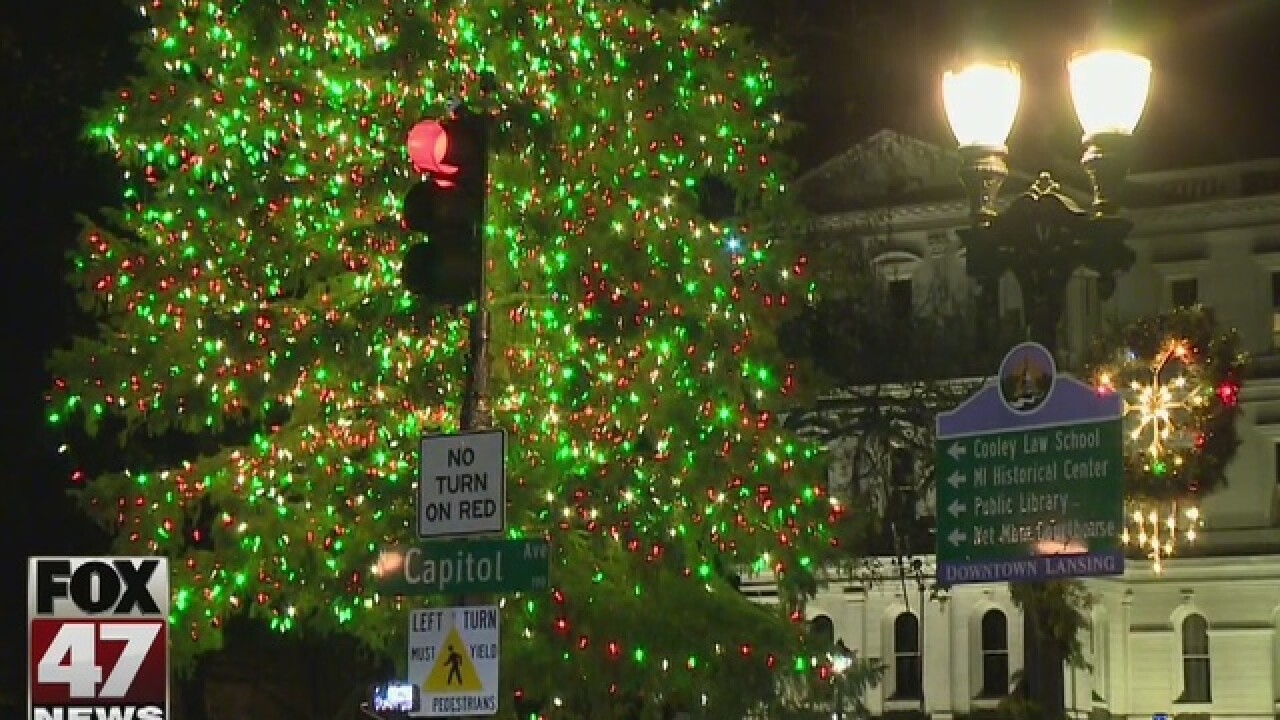 61-foot spruce chosen as Michigan's state Christmas tree
