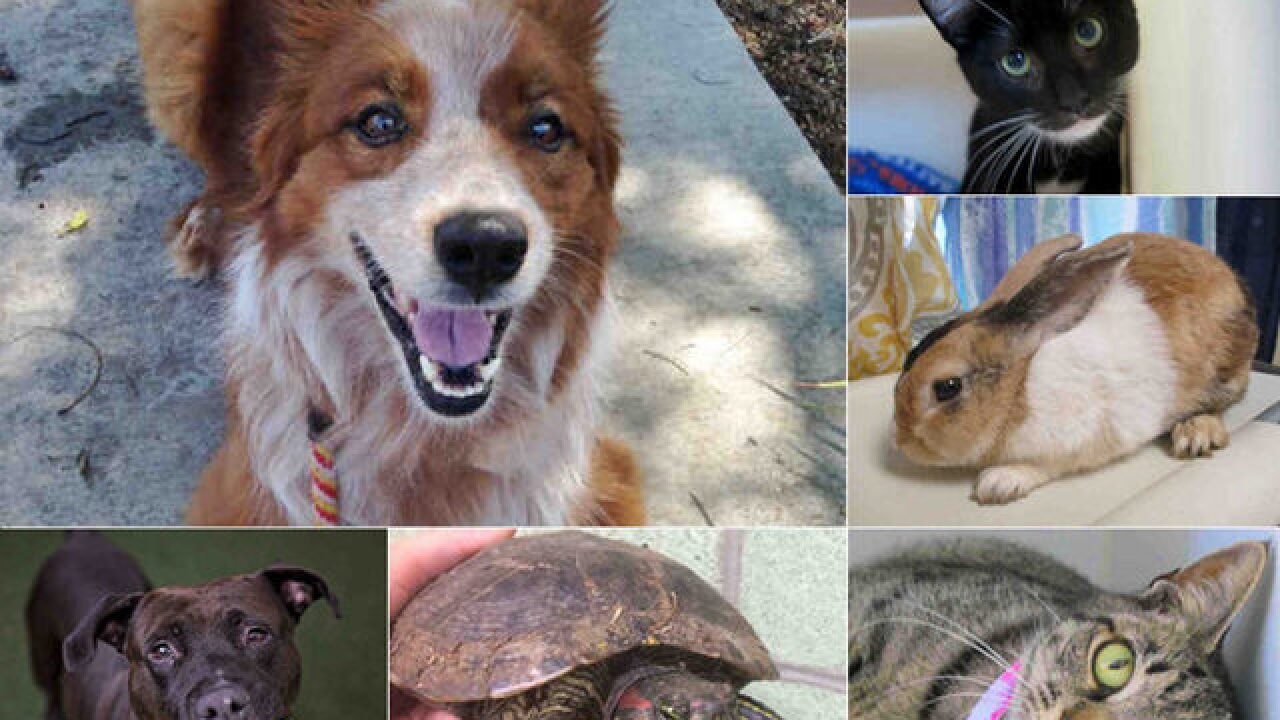 San Diego animal services waives adoption fees for 'Clear the Shelters Day'