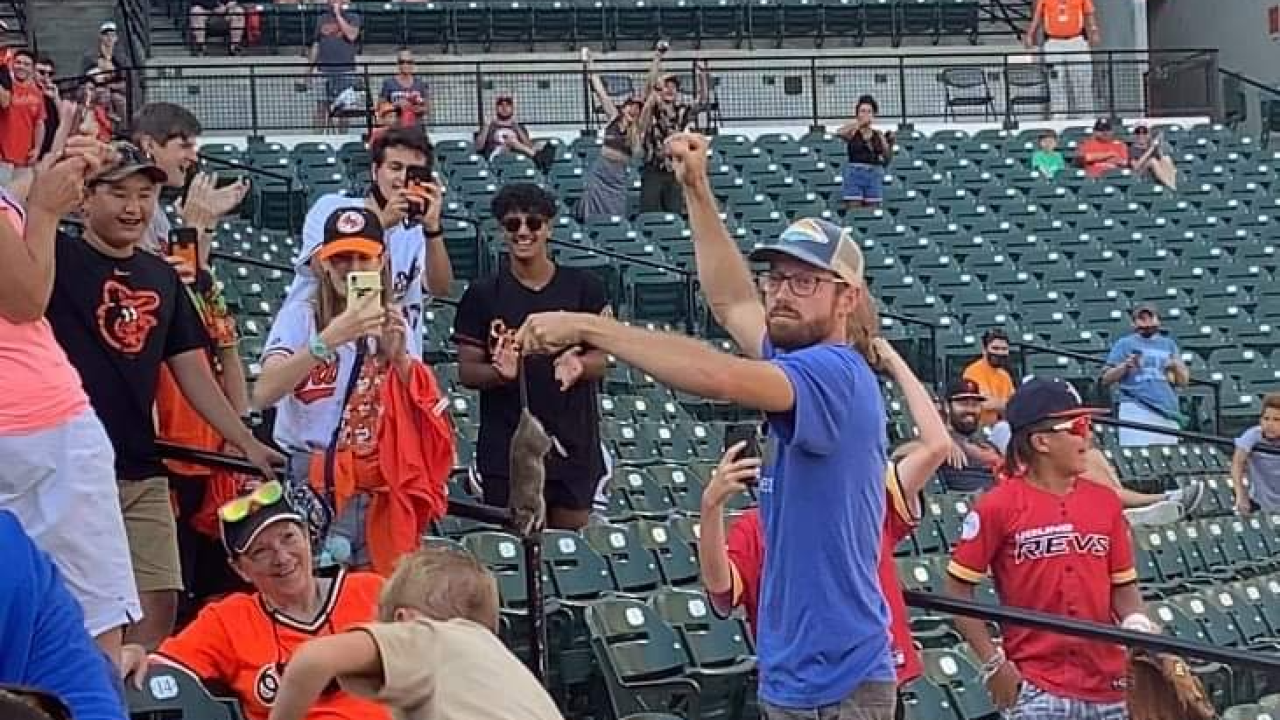 'He's scaling the chairs for the rat.' Fan catches rat with bare hands at Orioles game