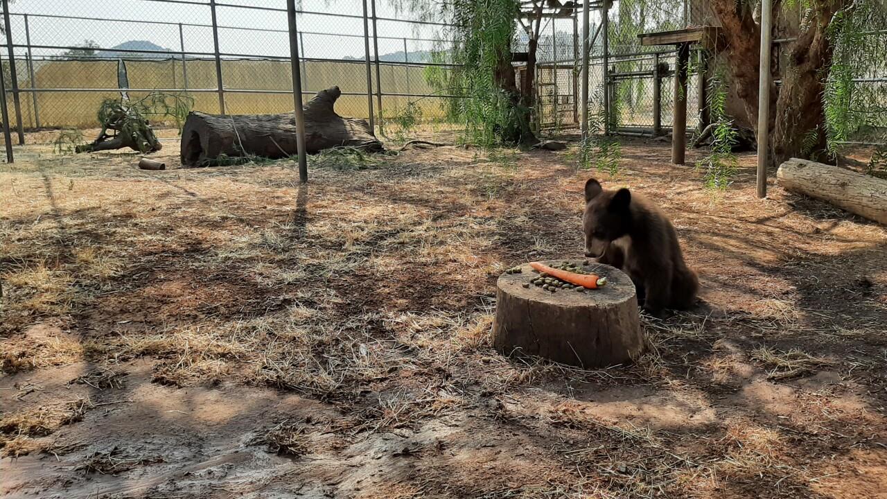 san diego humane bear cubs 09022021_2.jpg