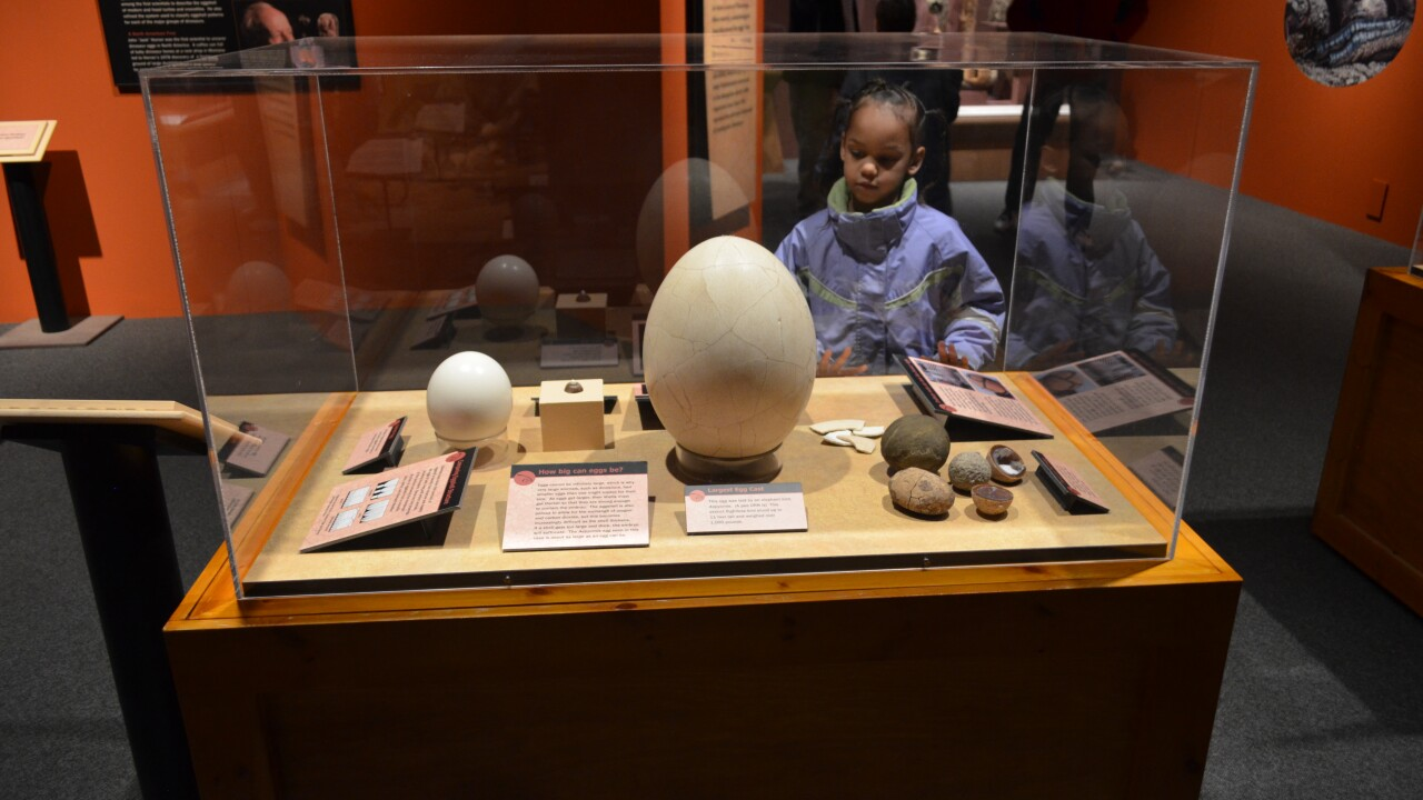 'Tiny Titans: Dinosaur Eggs and Babies' exhibit opens at Virginia Living Museum