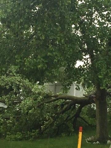 trees down detroit.jpg