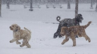 Michigan Humane Society: Bring your pets inside during cold weather