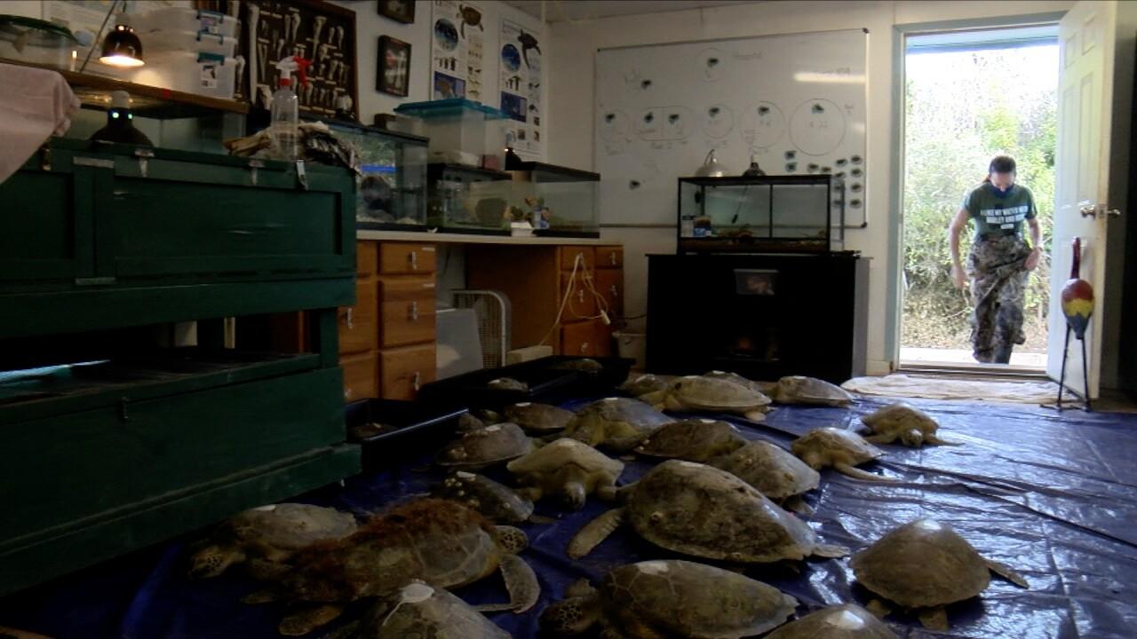 Sea Turtle Release Previews.jpg