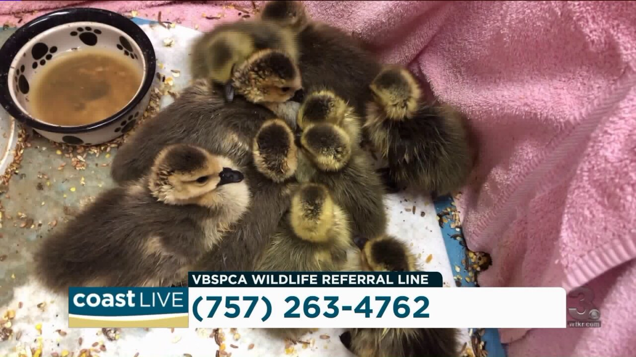How to respond to injured wildlife on Coast Live