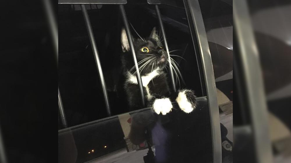 cat-burglar2.png